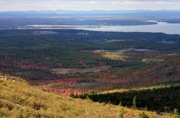 Cadillac Mountain fall foliage photo, Acadia National Park, Maine