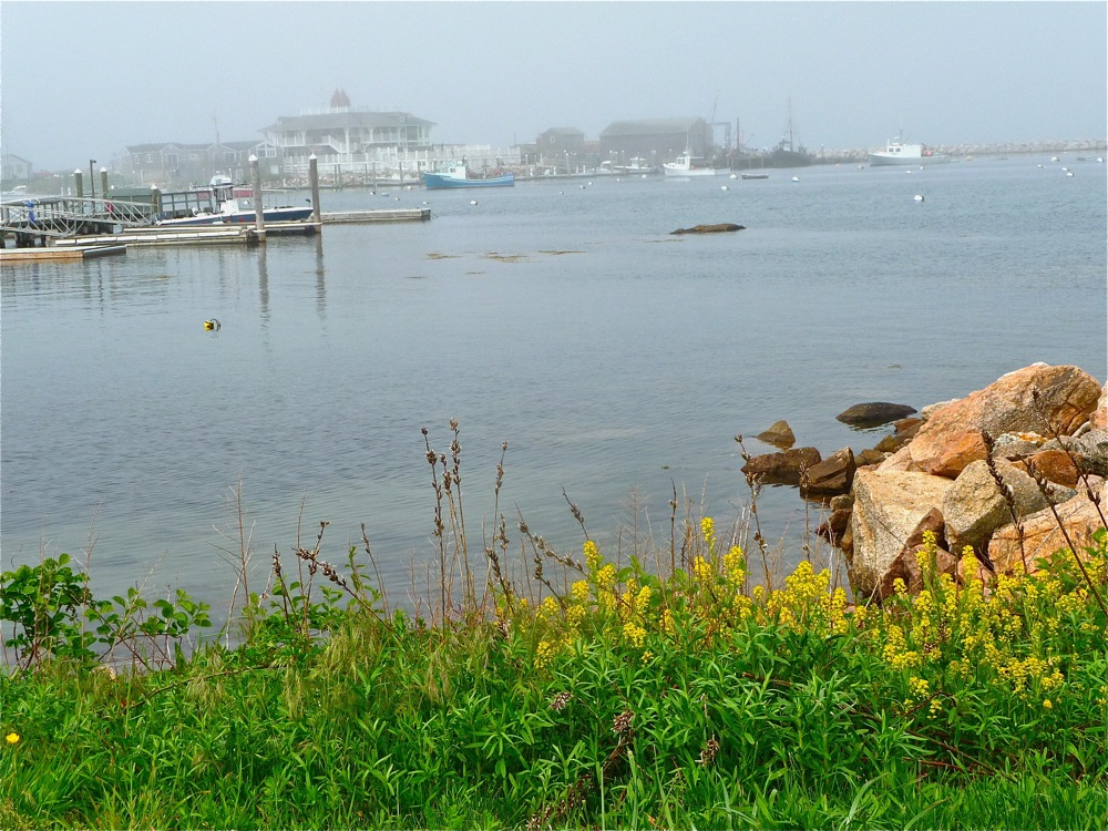 Flowers and sea perfectly co-exist in Little Compton, RI