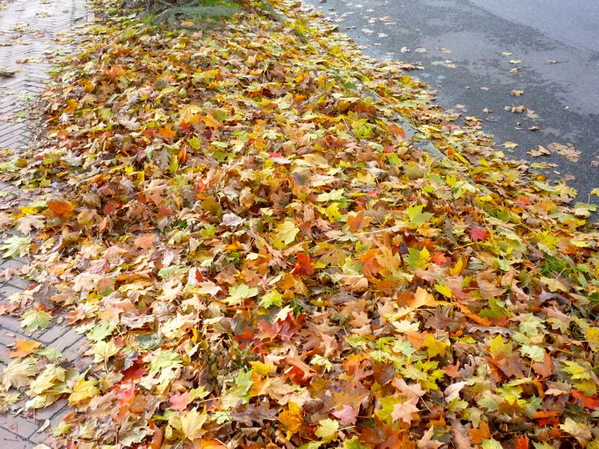Picture of fall leaves in Fairhaven MA