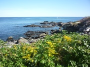 Marginal Way photo, Ogunquit, Maine
