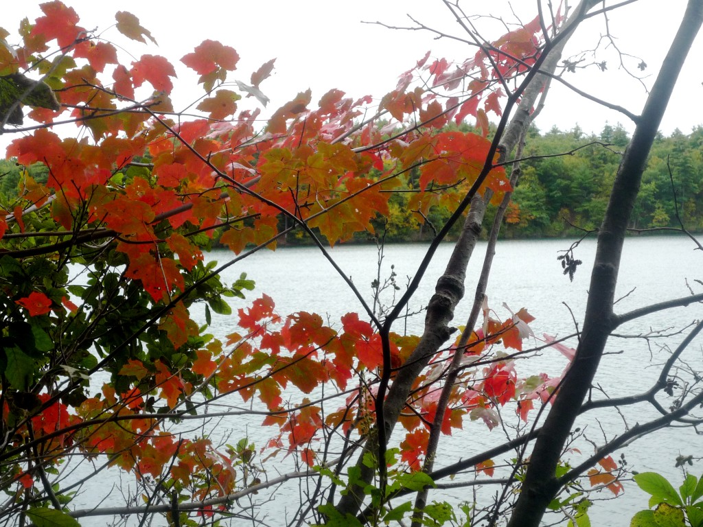 Walden Pond, Concord MA., in the fall