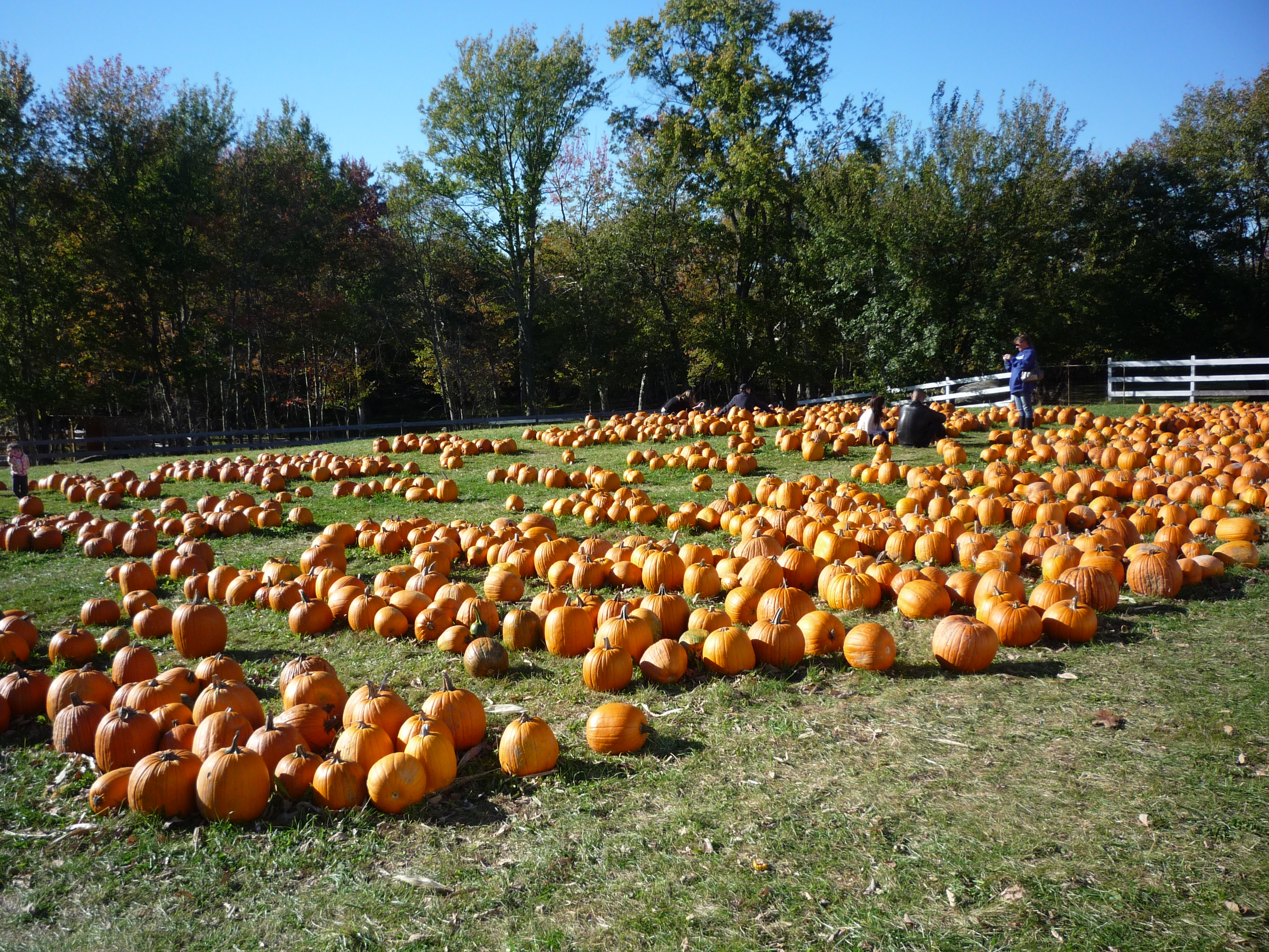 A Fall Road Trip To Adams Farm in Cumberland, R.I.