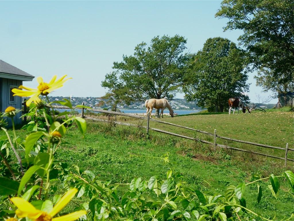 Photo of farm with horses in Tiverton RI