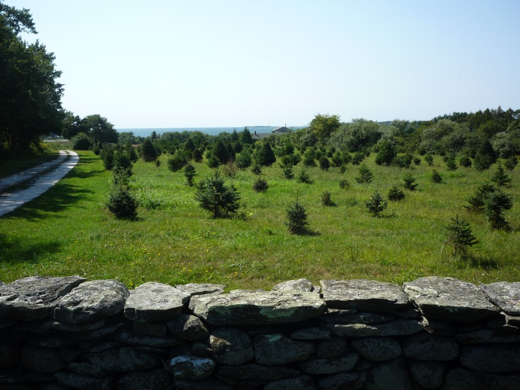Photo of farm land and water in Tiverton RI