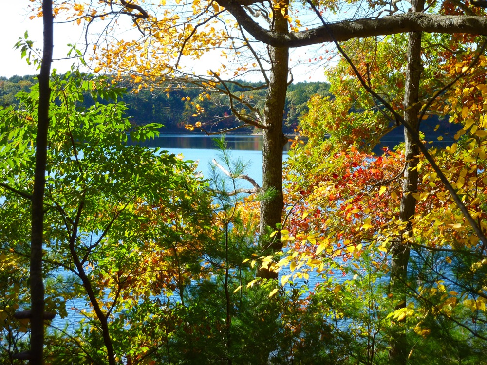 Viewing Walden Pond in Concord, MA through the trees.