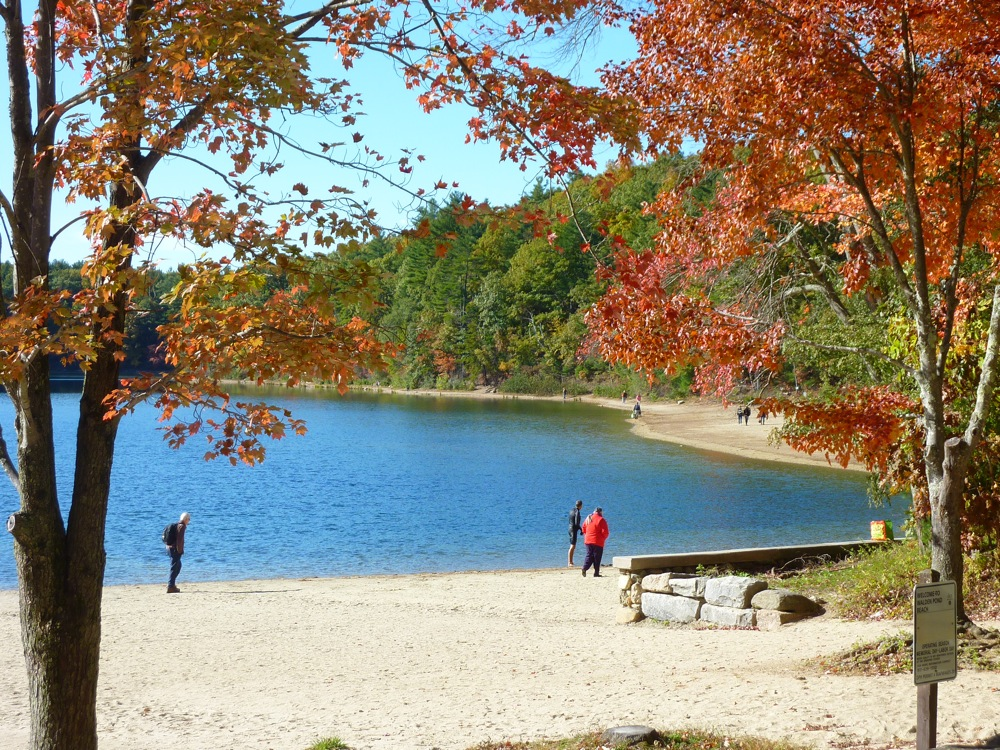 Walden Pond in Concord, MA during the fall.
