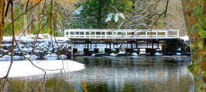 Walpole Town Forest in Walpole, Mass., Offers Scenic Serenity in Suburbia