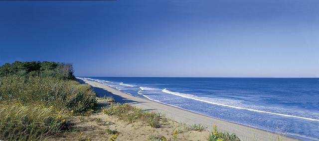 The Five Best Cape Cod Beaches