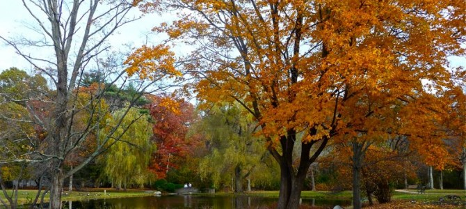 When Bird Park in Walpole, Mass., Shines in Fall Colors