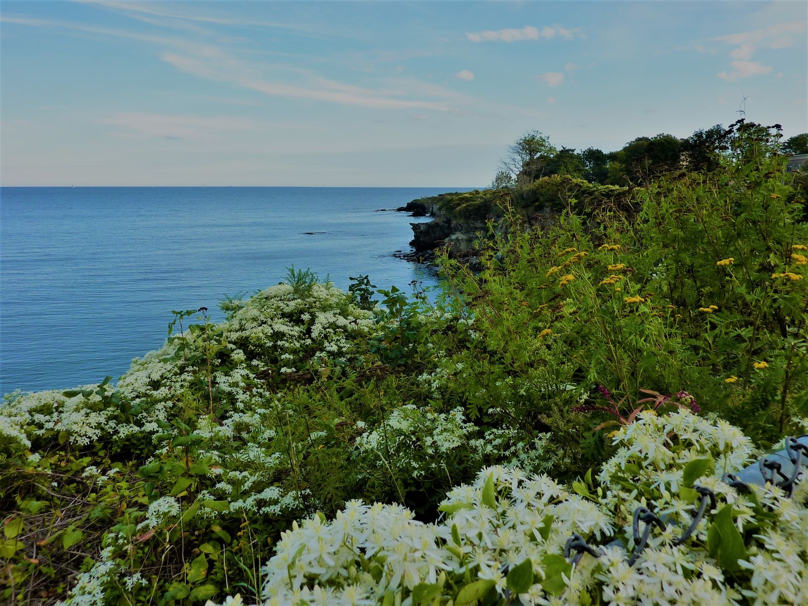 Flowers, ocean and a sense of renewal walking The Cliff Walk in Newport, R.I.