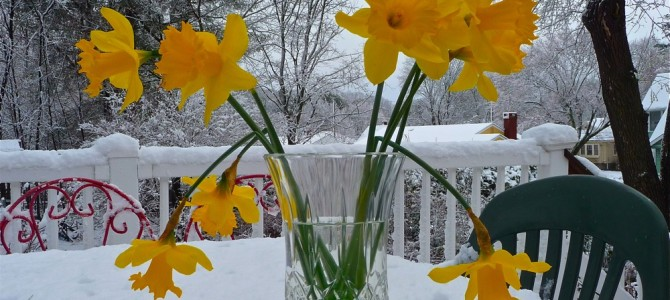 Monday Photo of the Day: Spring Takes a Backseat to Winter