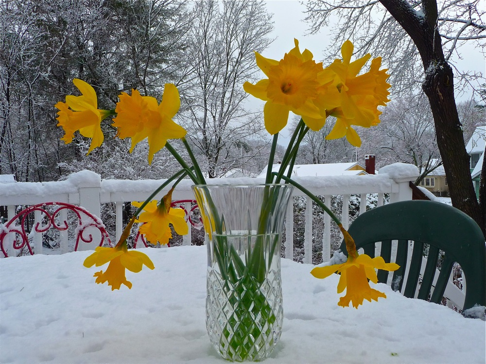 Spring becomes winter in New England.