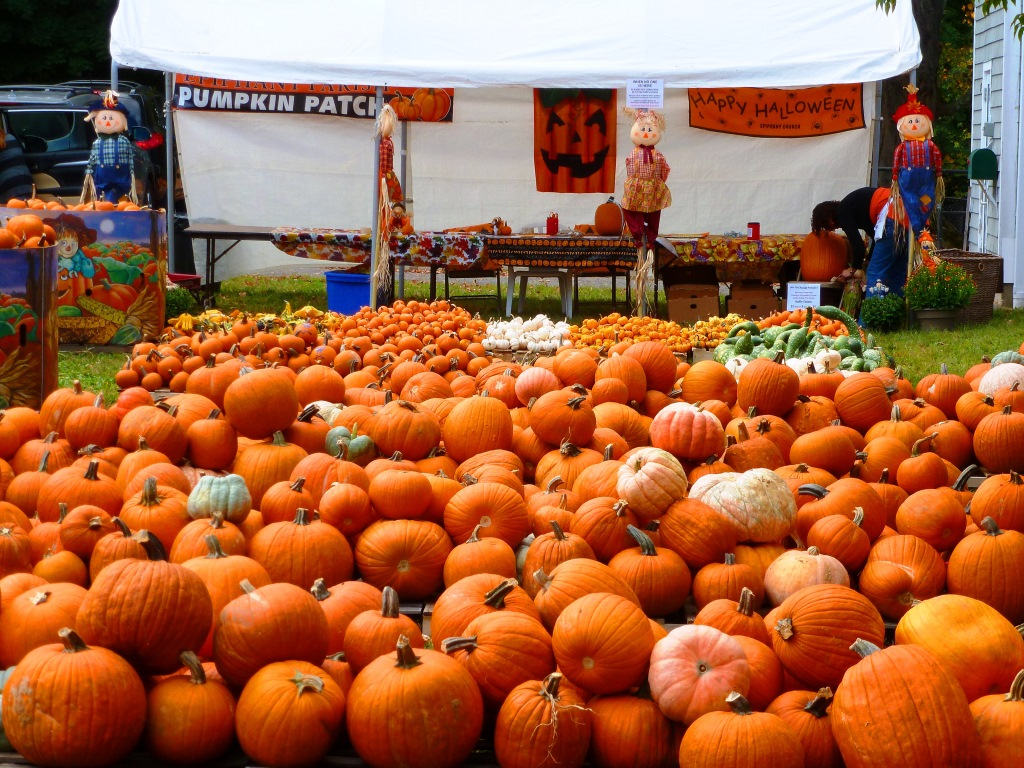 Plenty of pumpkins to choose from at the Epiphany Parish of Walpole Pumpkin Patch in Walpole, Mass.