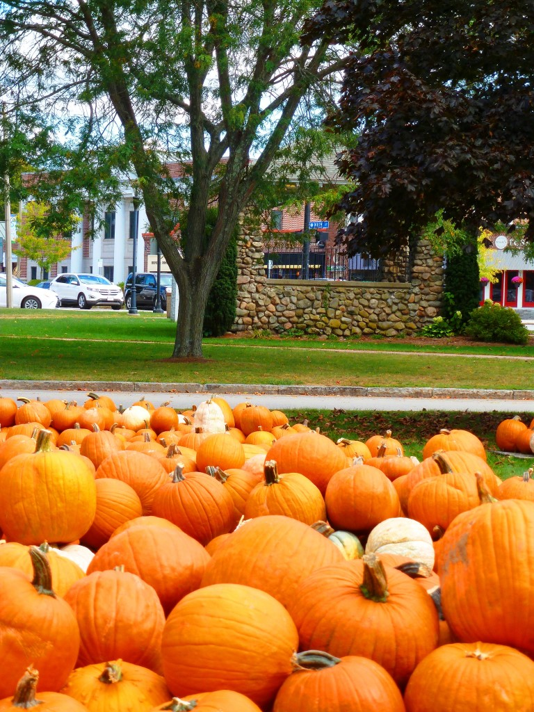 Pumpkins across from the Walpole Town Common in Walpole, Mass.