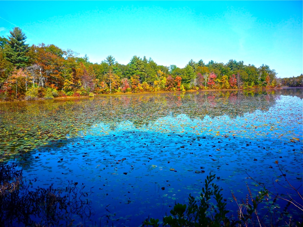 One of six ponds at Borderland State Park in Easton, Massachusetts.