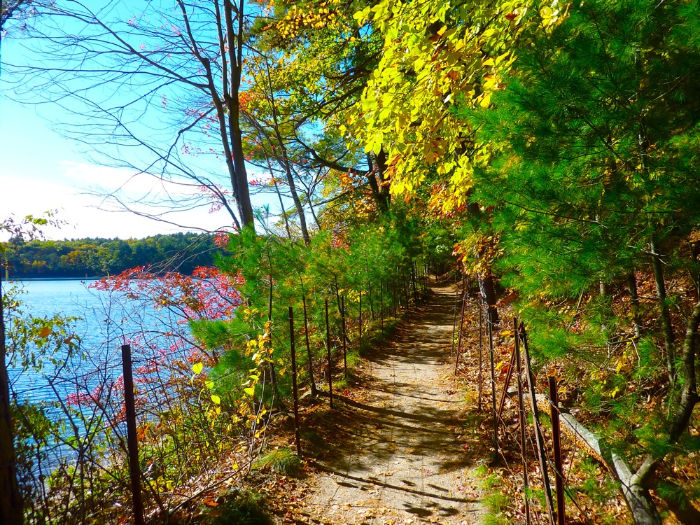 Walking trail alongside Walden Pond in Concord, Mass.