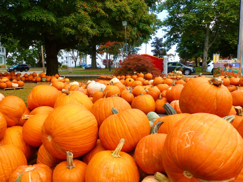 Pumpkins everywhere at the Epiphany Parish of Walpole Pumpkin Patch in Walpole, MA.