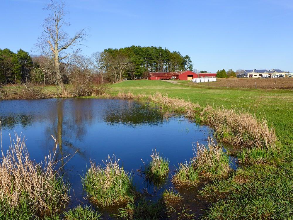 Pond, field, barn at the Aggie School in Walpole, Mass.