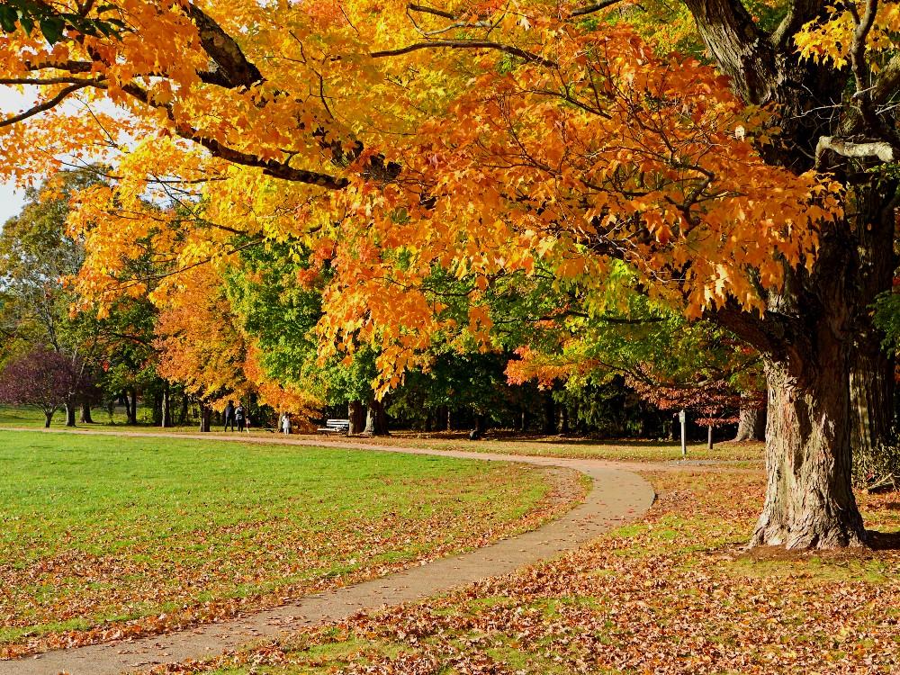 Bird Park in autumn, Walpole, Massachusetts.