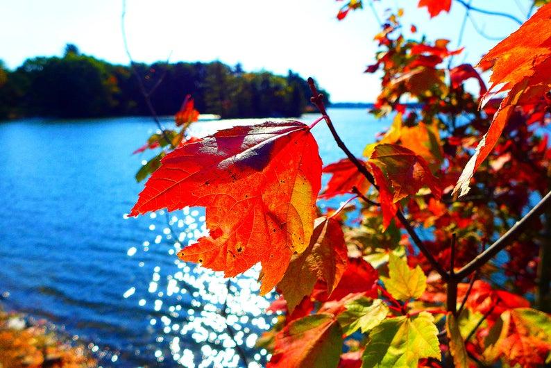 Foliage at Willett Pond in Walpole, Mass.