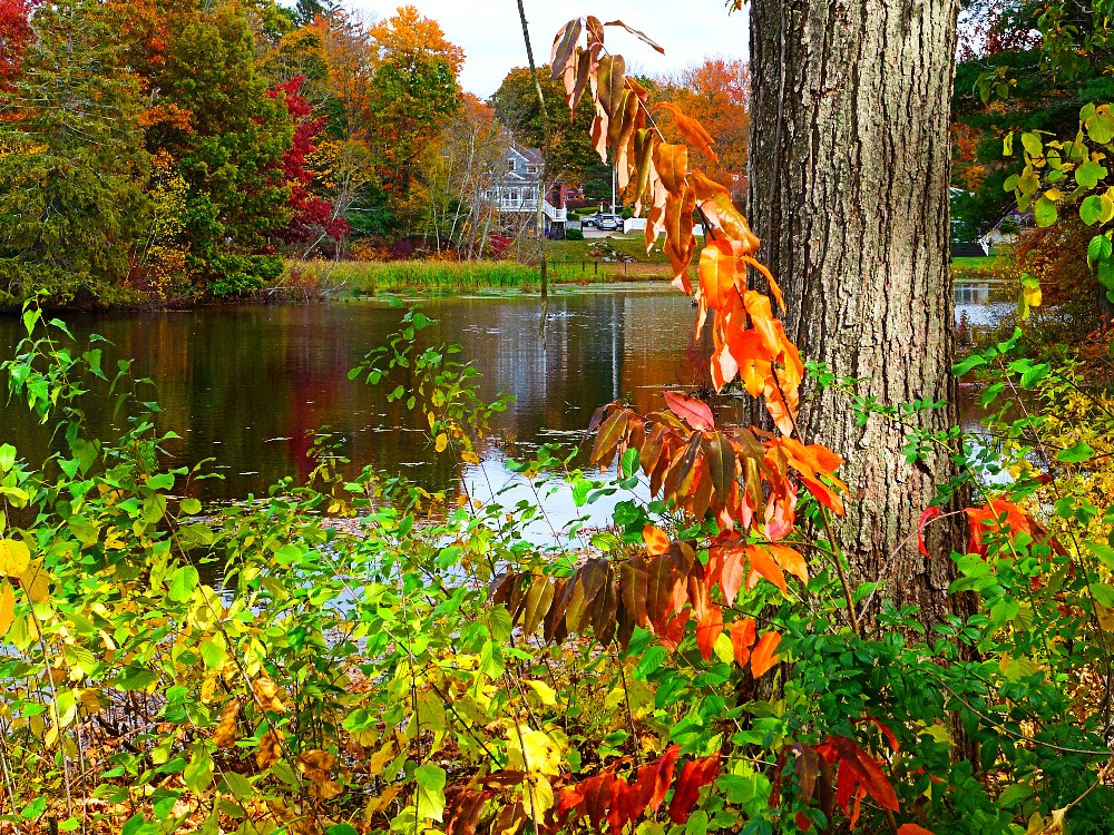 Another look at Memorial Pond in Walpole, Mass.