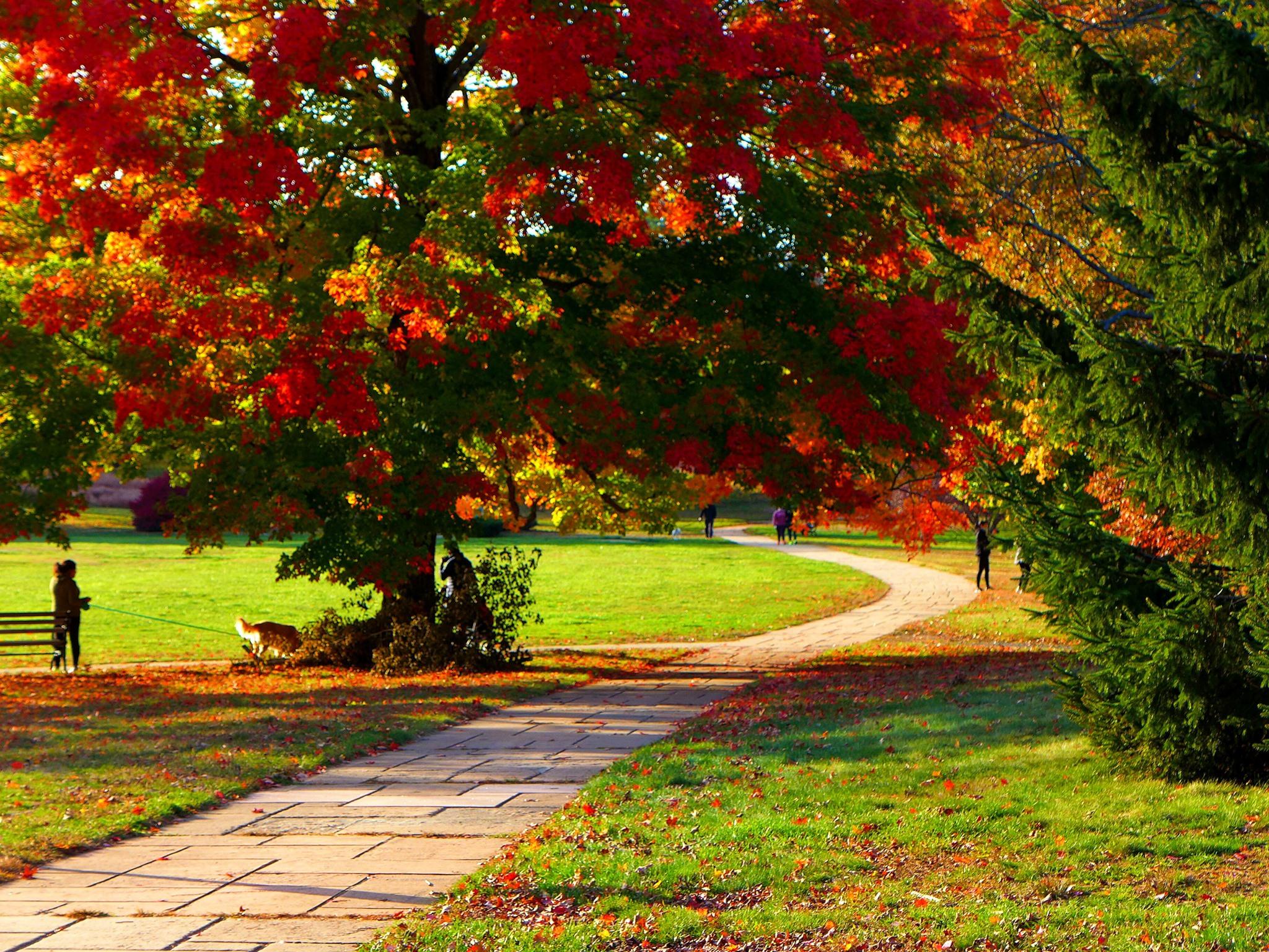Fall foliage at Bird Park in Walpole, Mass.