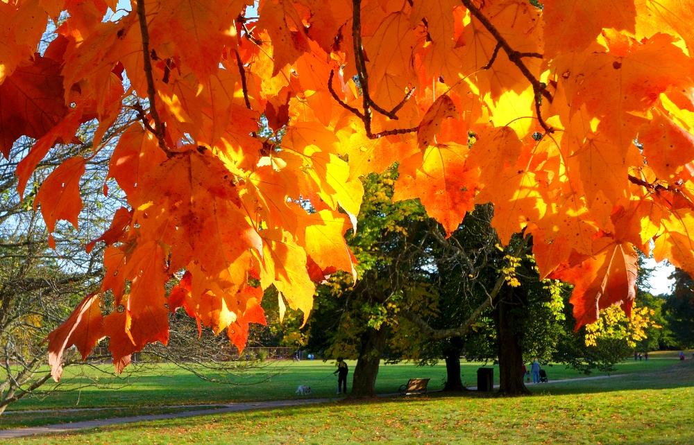 Autumn leaves at Bird Park in East Walpole, Mass.