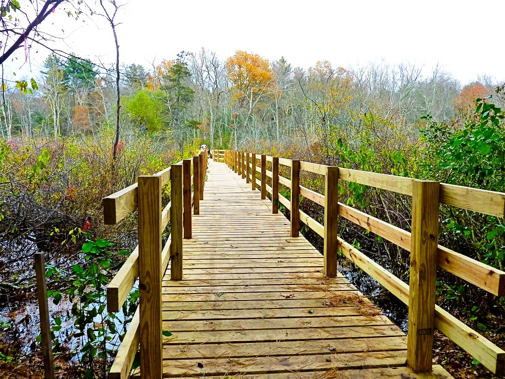 Walking trail at the South Walpole Town Forest in Walpole, Massachusetts.
