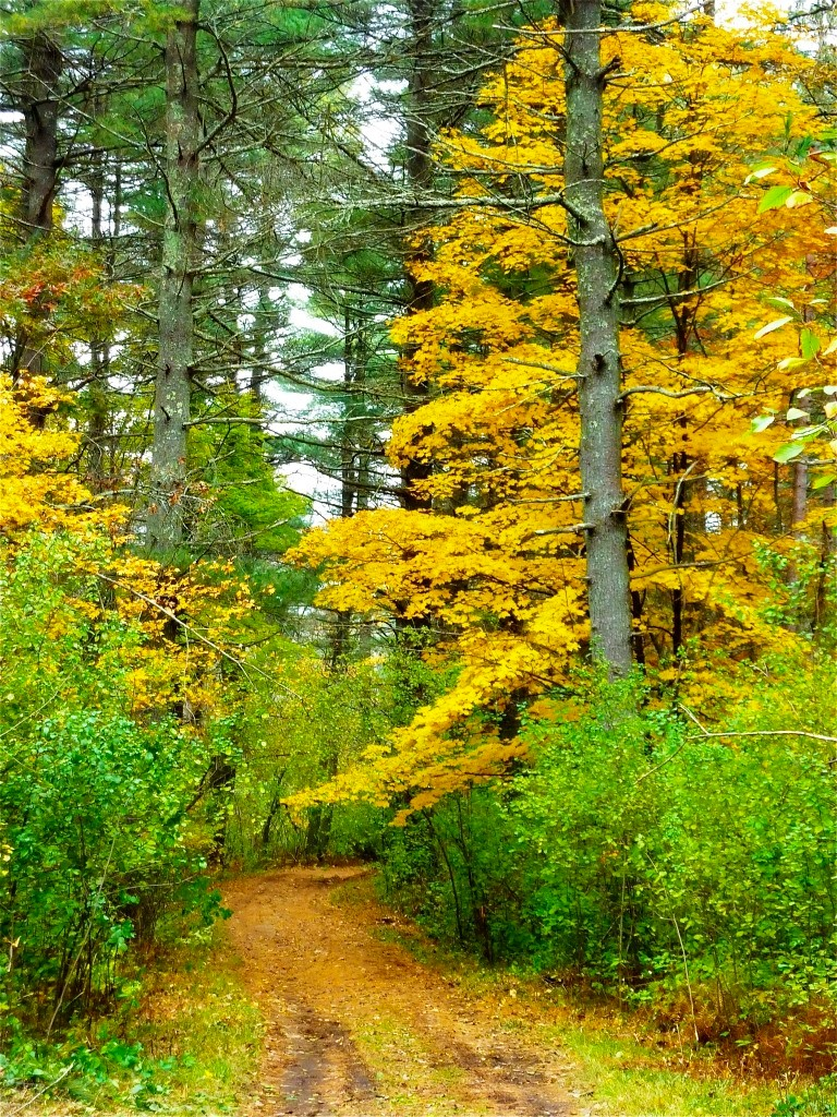 Walking trail at the Walpole Town Forest in South Walpole., Massachusetts