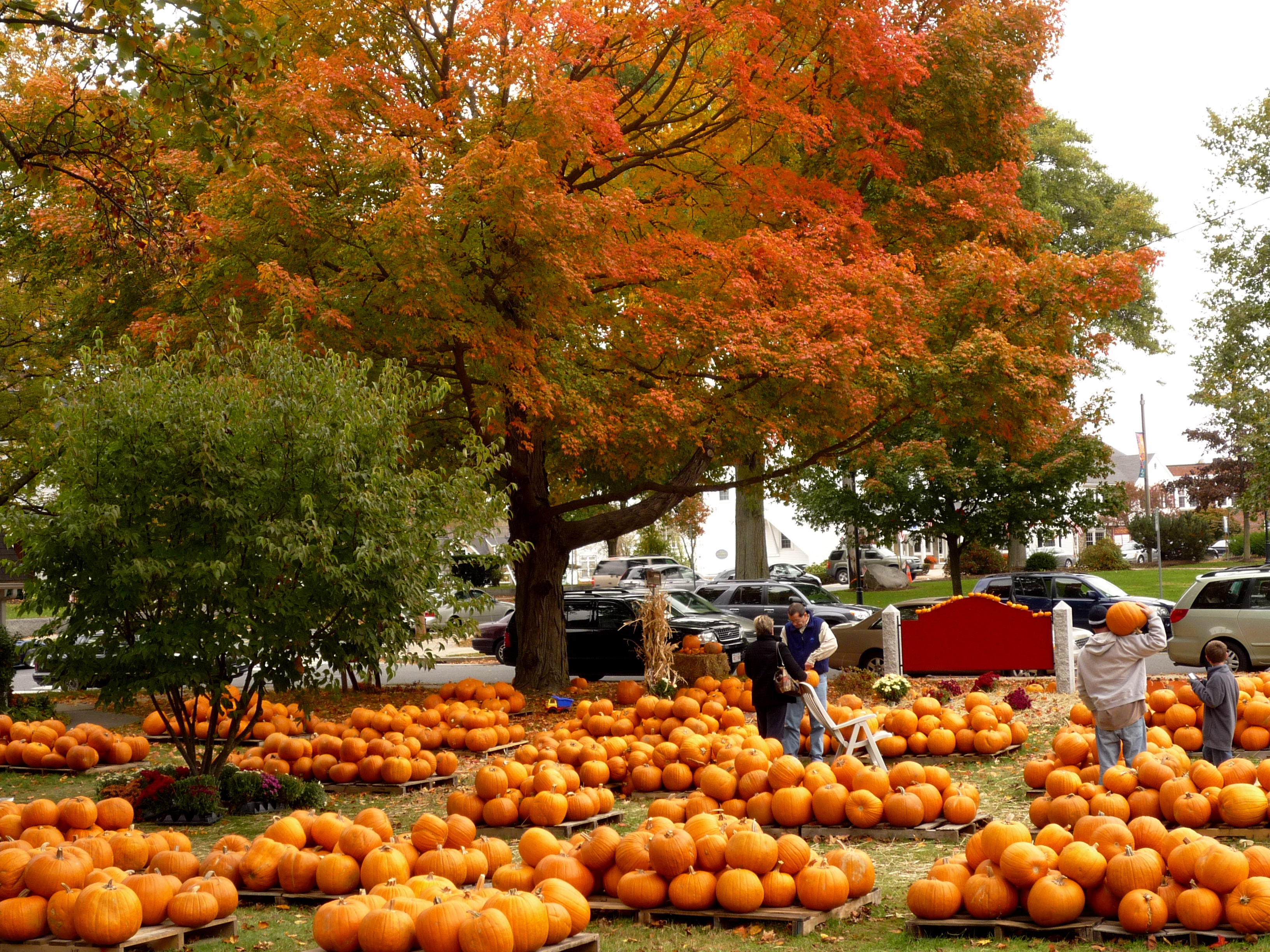 Image of Pumpkin Patch in Walpole MA
