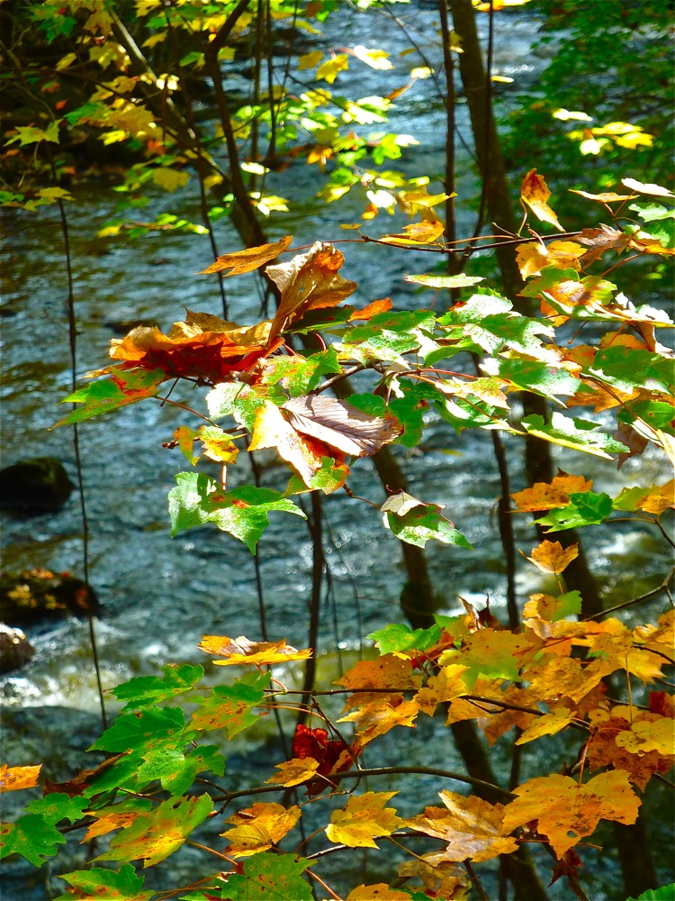 Fall colors along the Nissitissit River in Brookline, New Hampshire.