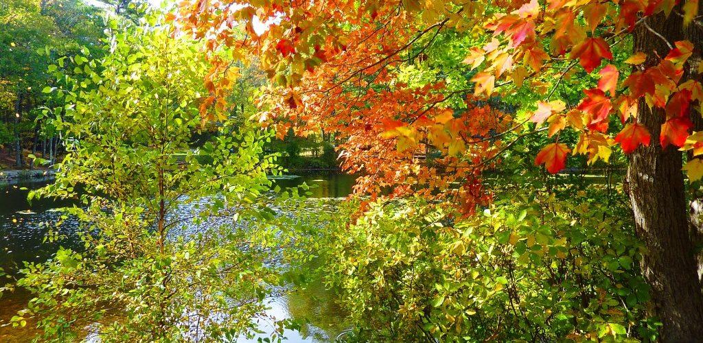 Foliage season at Rocky Woods in Medfield, Massachusetts.