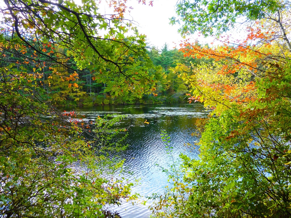 Peaking through the colorful trees at Chickering Pond in Medfield, Massachusetts.