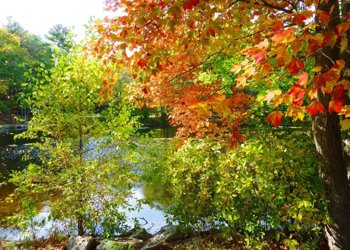 Foliage season at Rocky Woods in Medfield, Massachusetts.