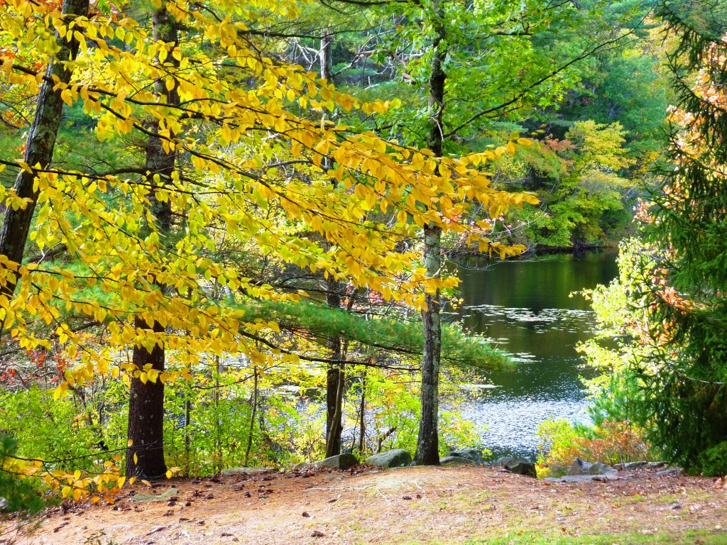Fall time at Chickering Pond at Rocky Woods in Medfield, Massachusetts.