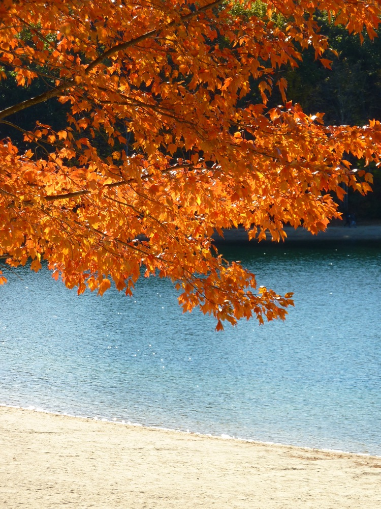 Foliage and Walden Pond in Concord, Mass., combine to make for one of the most beautiful New England destinations.