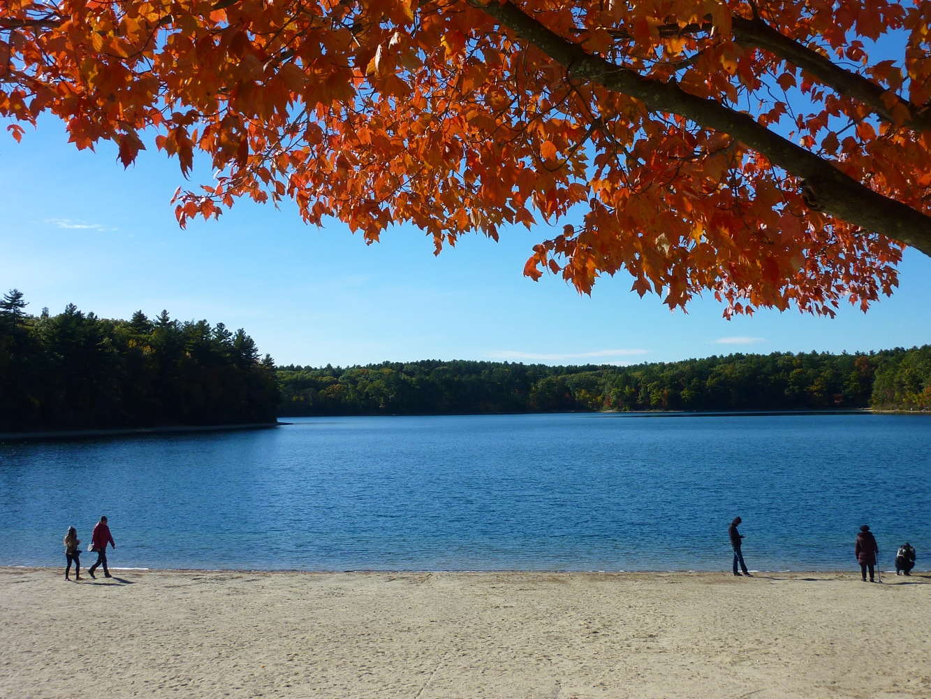 Fall beach scene at Walden Pond in Concord, Massachusetts.