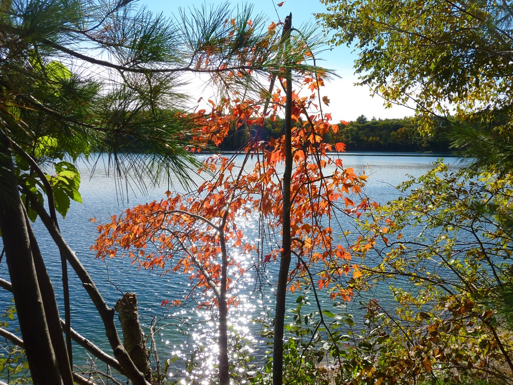 Fall foliage and sun shining on the water at Walden Pond in Concord, Massachusetts.