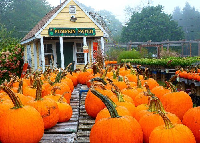 Pumpkin patch at Phantom Farms in Cumberland, R.I.