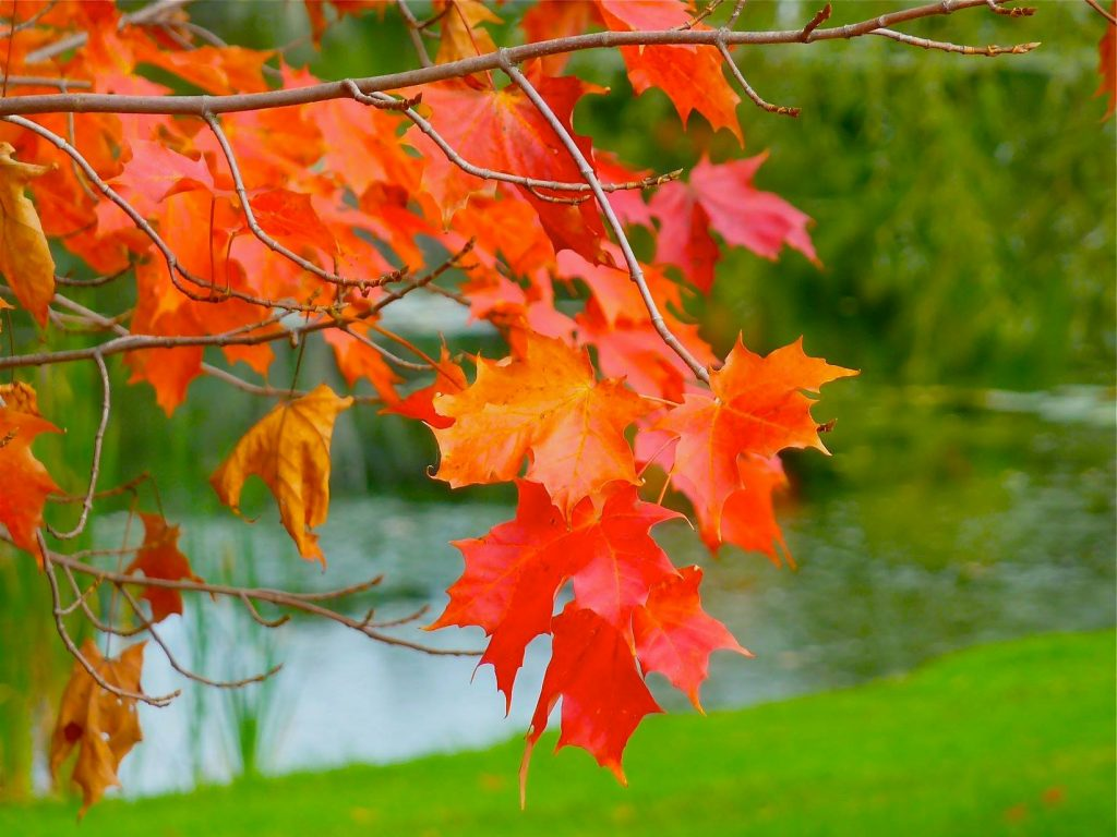 Fall colors at the Norfolk Aggie School in Walpole, Massachusetts.